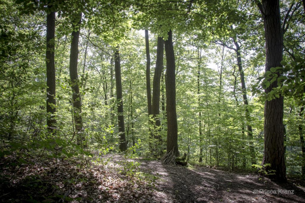 Oase der Ewigkeit, Eitorf, Niederweiler, Deutschland, 2017, Begräbniswald, Beisetzung, Urne, Naturbestattung, Wald, Beerdigung, Abschied, Trauer