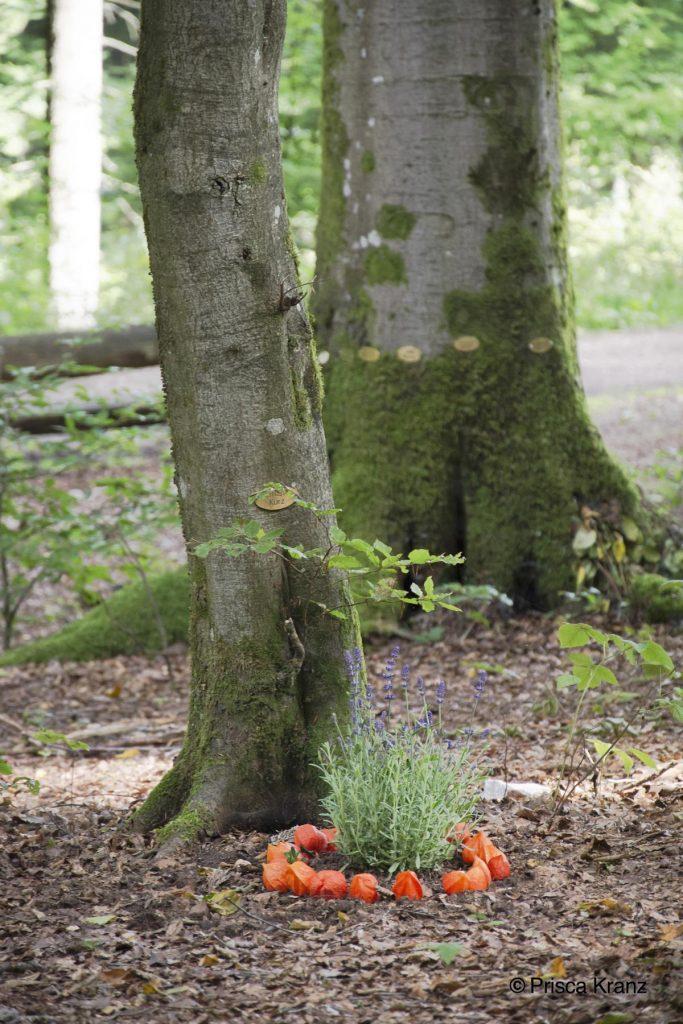 Oase der Ewigkeit, Niederweiler, Deutschland, 2017, Begräbniswald, Beisetzung, Urne, Naturbestattung, Wald, Beerdigung, Abschied, Trauer