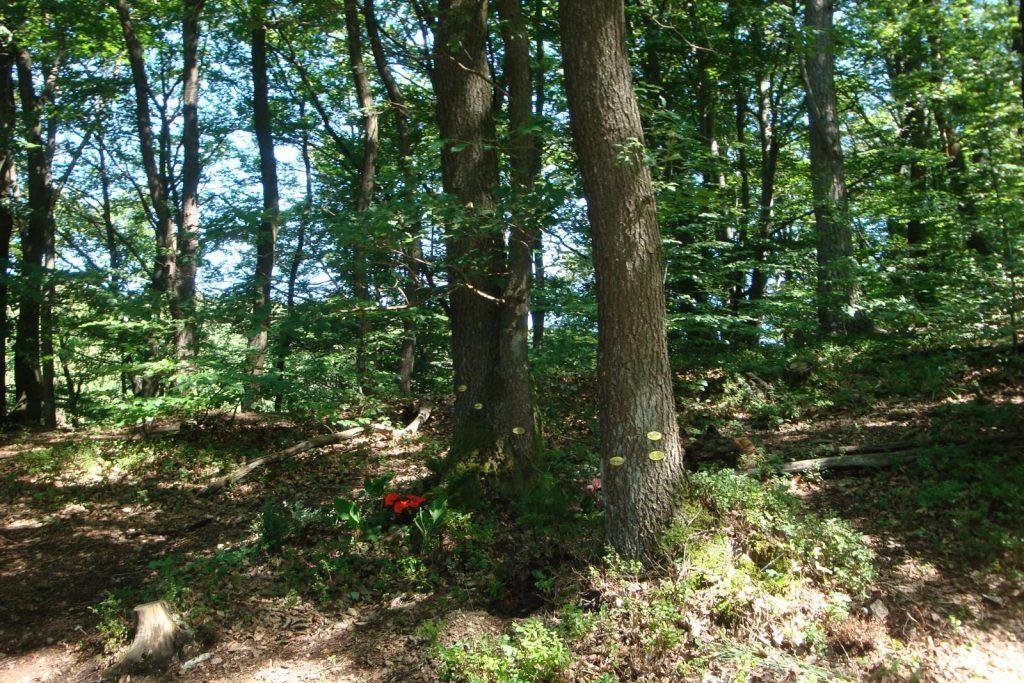 Gemeinschaftsbäume-